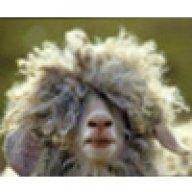 pan owca